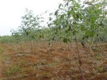 Ratusan Hektare Pertanian di Medan Labuhan Rusak Diterjang Banjir
