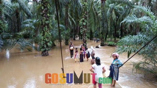 Puluhan Hektar Kebun Kelapa Sawit dan Persawahan Warga Terendam Banjir