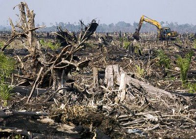 Peneliti Australia Abaikan Krisis Ekologi Negerinya
