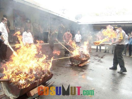 Polres Padangsidimpuan Musnahkan 49 Kg Ganja Kering