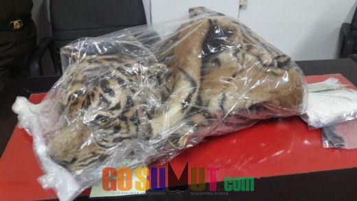 Kejatisu Terima Dua Tersangka Perdagangan Kulit Harimau