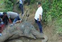 Akhyar Turut Berduka, Gajah Betina Neneng Mati Akibat Sudah Tua