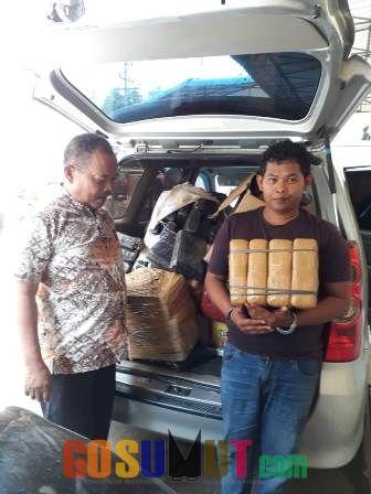 Pengedar Ganja di Sunggal Ditangkap Polrestabes Medan